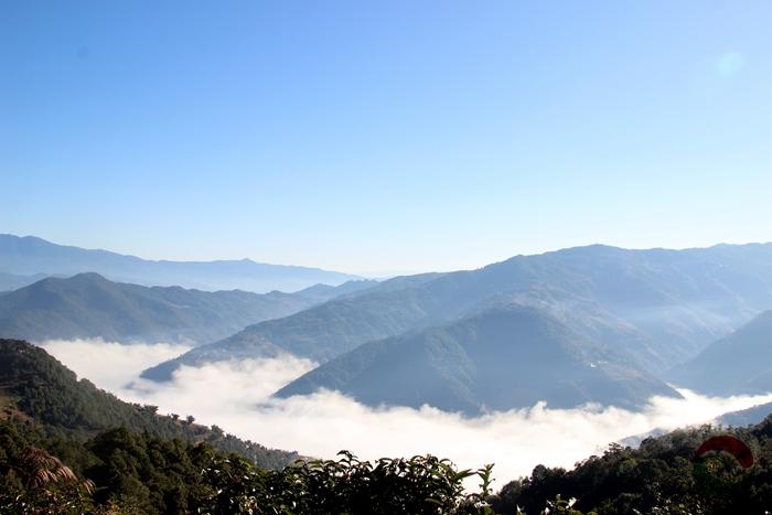 滇红集团开展代表性古茶树资源调查